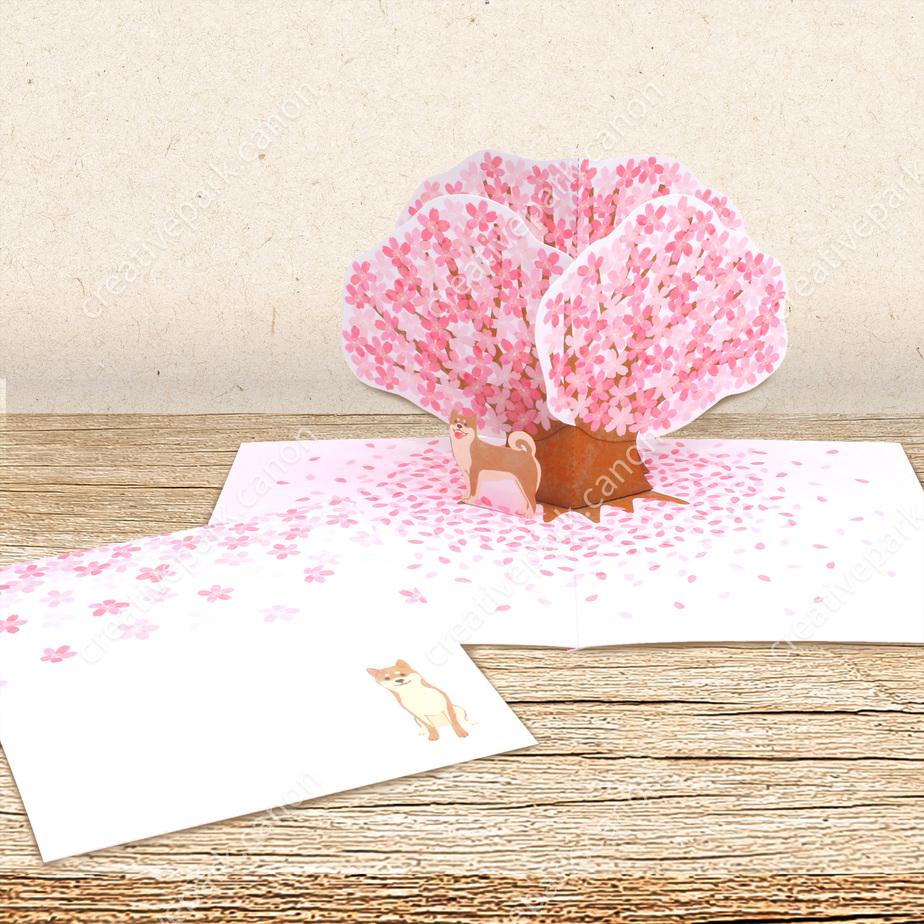 Объемная открытка (вишневое дерево 01),Объемные открытки,Карточка,Весна,цветок,Цветы вишни,розовый